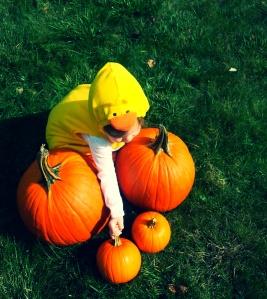ab pumpkins2
